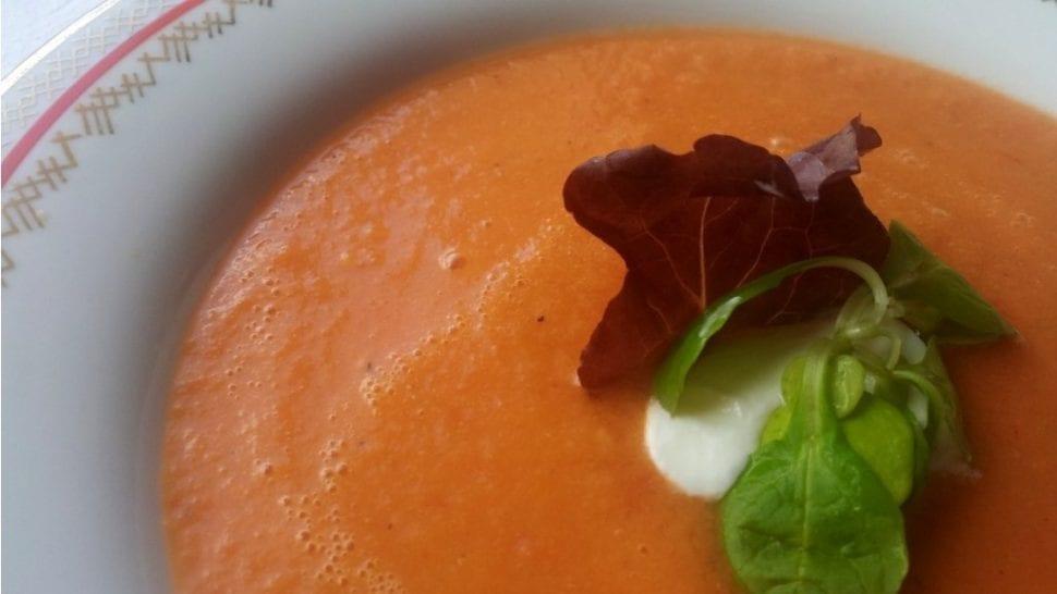 surova paradajkova polievka